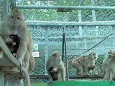 Cruelty Free International Mauritius monkeys