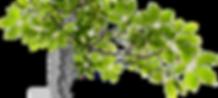 http___pluspng.com_img-png_tree-limb-png