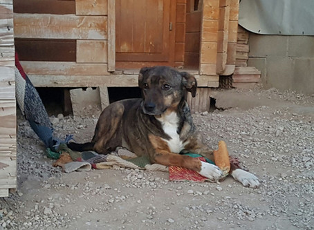 Erneuter Besuch in Spanien im Tierheim bei Encarna