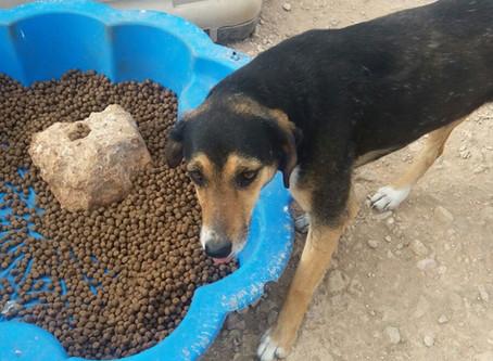 Spanisches Tierheim in großer Not
