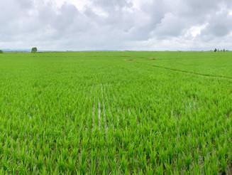 中國黑龍江省五常市農業考察之旅