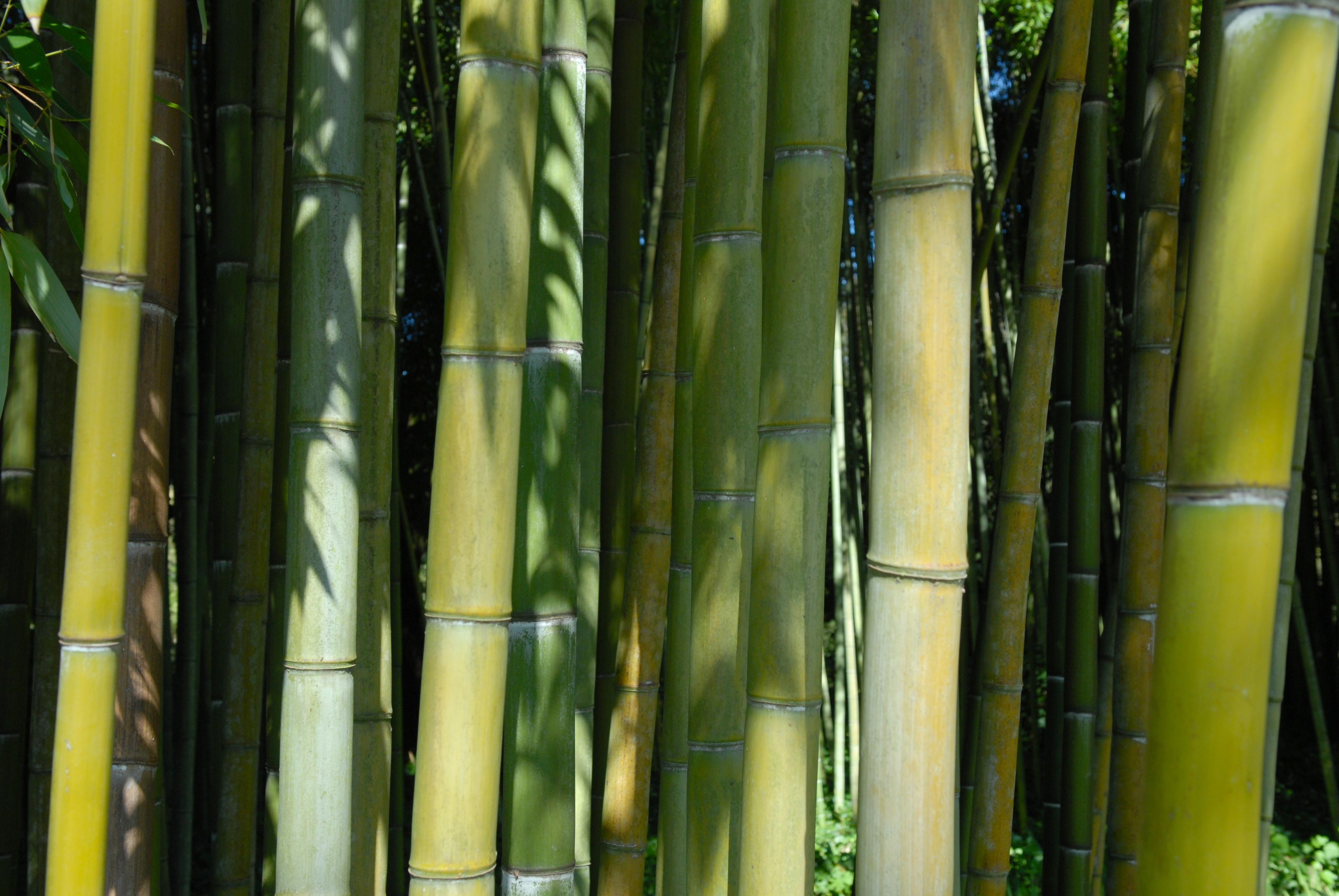 bamboo - Ninfa Gardens, Italy