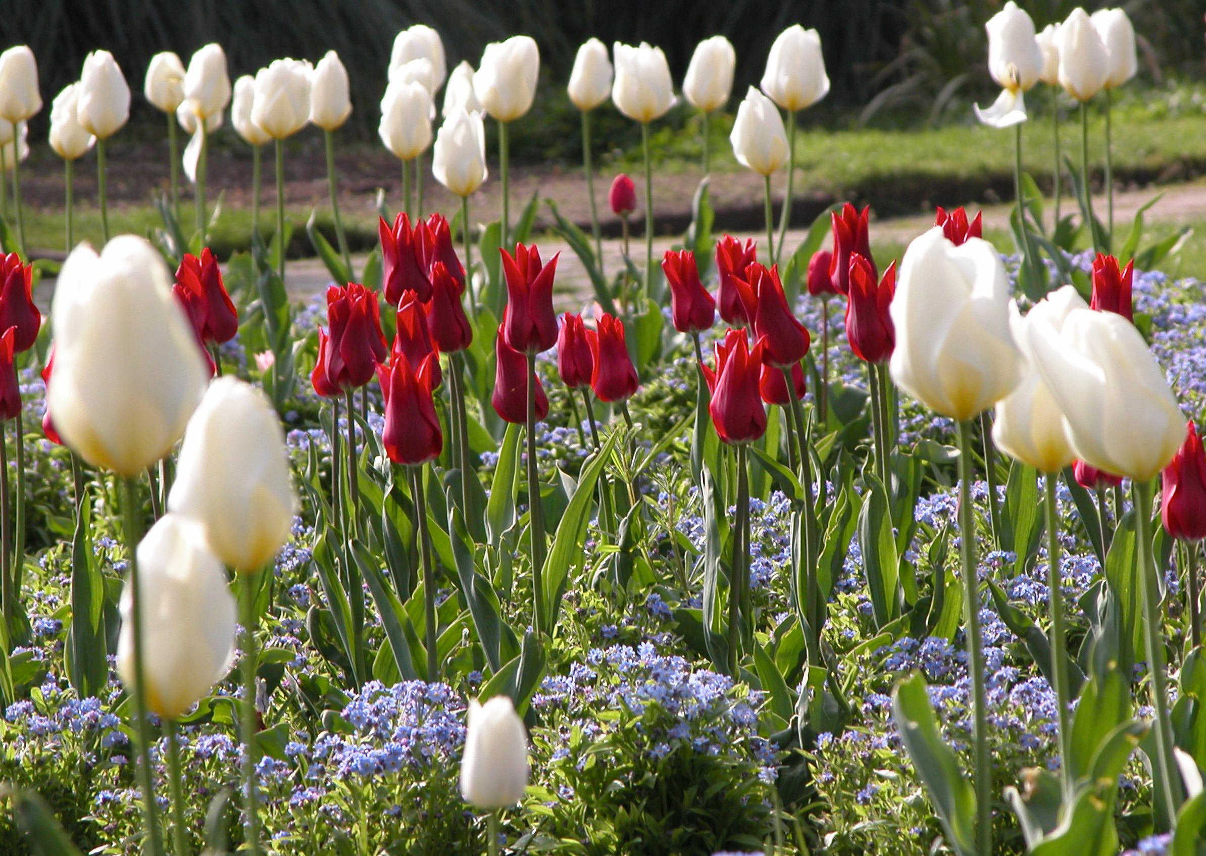 springtime in the flower garden