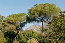 Ninfa Gardens, Italy
