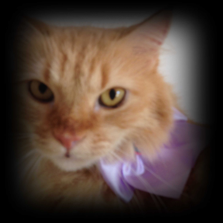 Esta é a minha gatinha Laila