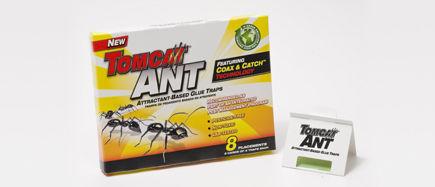טומקאט - מלכודת דבק לנמלים