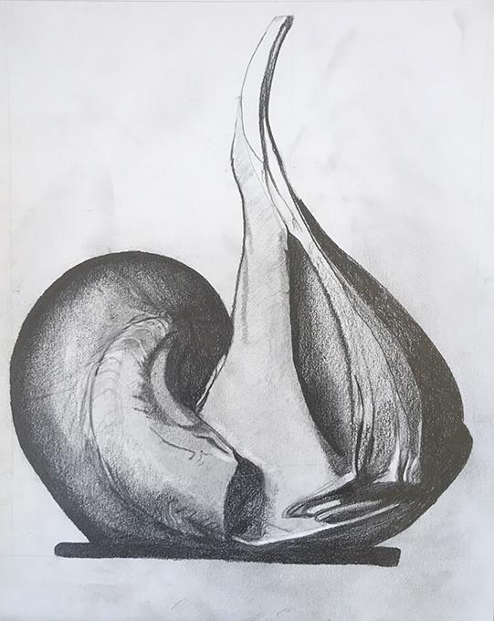 coquillage tamara
