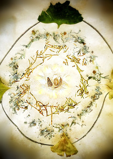 Grandmother of the flame and magic cup hearth of feathers, eggshells, mugwort, pine, ginko and ?citrine?