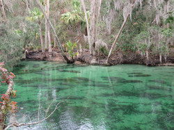 Kayak with Manatees at Blue Springs, Orange City, Deland, FL (12)