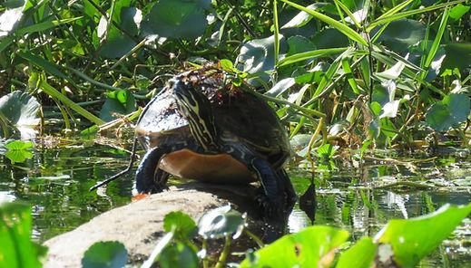 Florida Wildlife Kayak Tour Blue Spring,