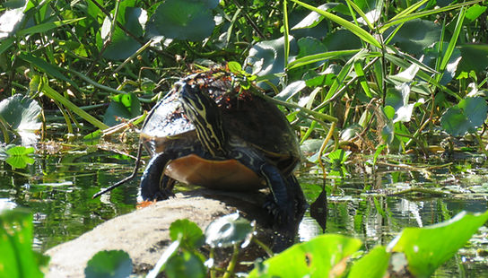Florida Wildlife Kayak Tour Blue Spring,