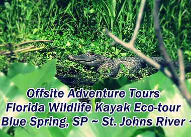 Florida Wildlife Kayak Canoe Eco Tour ne