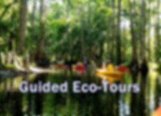 guided eco tours.jpg