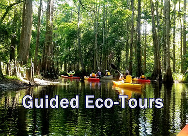 Guided Kayak Eco Tour