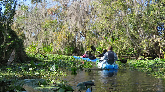 Guided Kayak Eco Tour St Johns River
