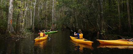 Kayak and Canoe Eco Tours near Orlando, Kayak Rentals near Disney