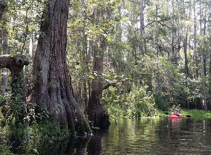 Kayak and Canoe Eco Tours near Orlando, Kayak Rentals near Disney