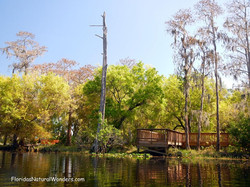 Floridas Natural Wonders