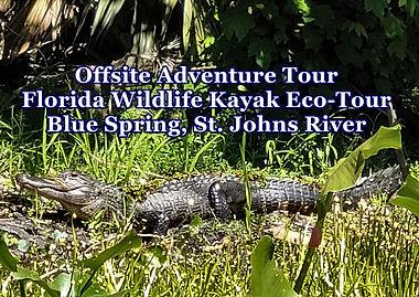 Wildlife Tour, Kayaking Gators, Alligato