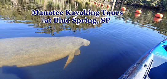 Kayaking_Manatee_Tours.jpg