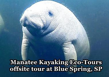 Manatee Kayaking Tour Blue Spring State