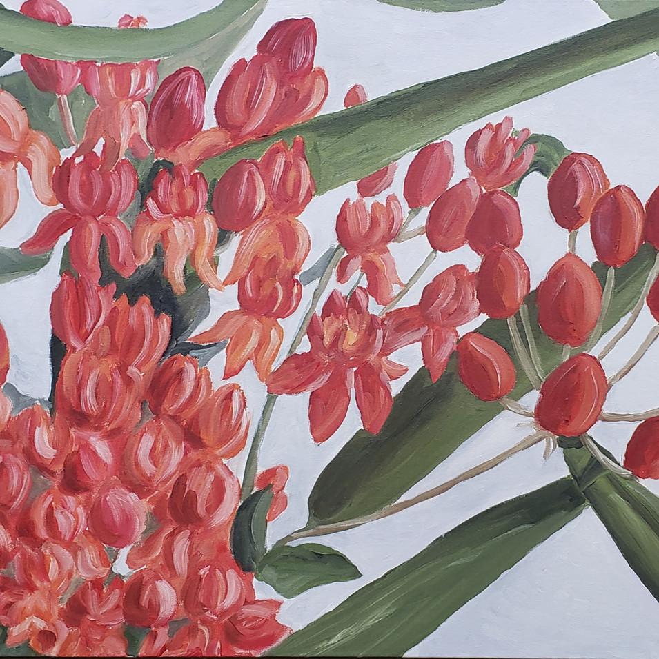 Il Fiore Rosso