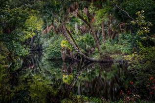 Blackwater Creek