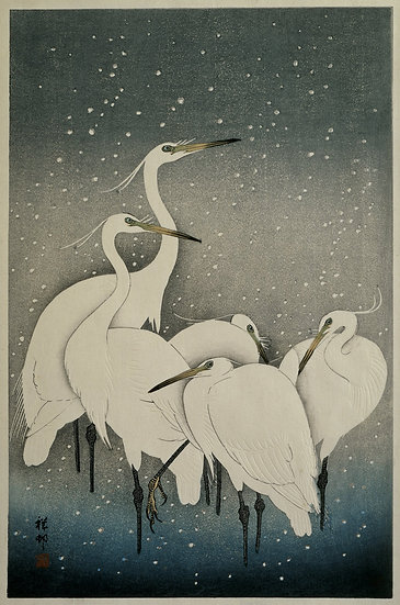 Group of Egrets