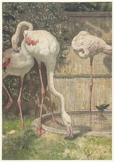 Three Flamingos Near A Basin