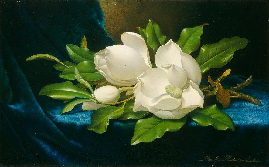 Giant Magnolias on a Blue Velvet Cloth