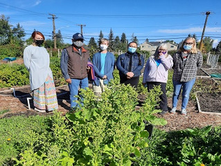 Tobacco harvesting ceremony at Inglewood Community Garden ushers in the harvest season