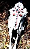 cabeza clan.png