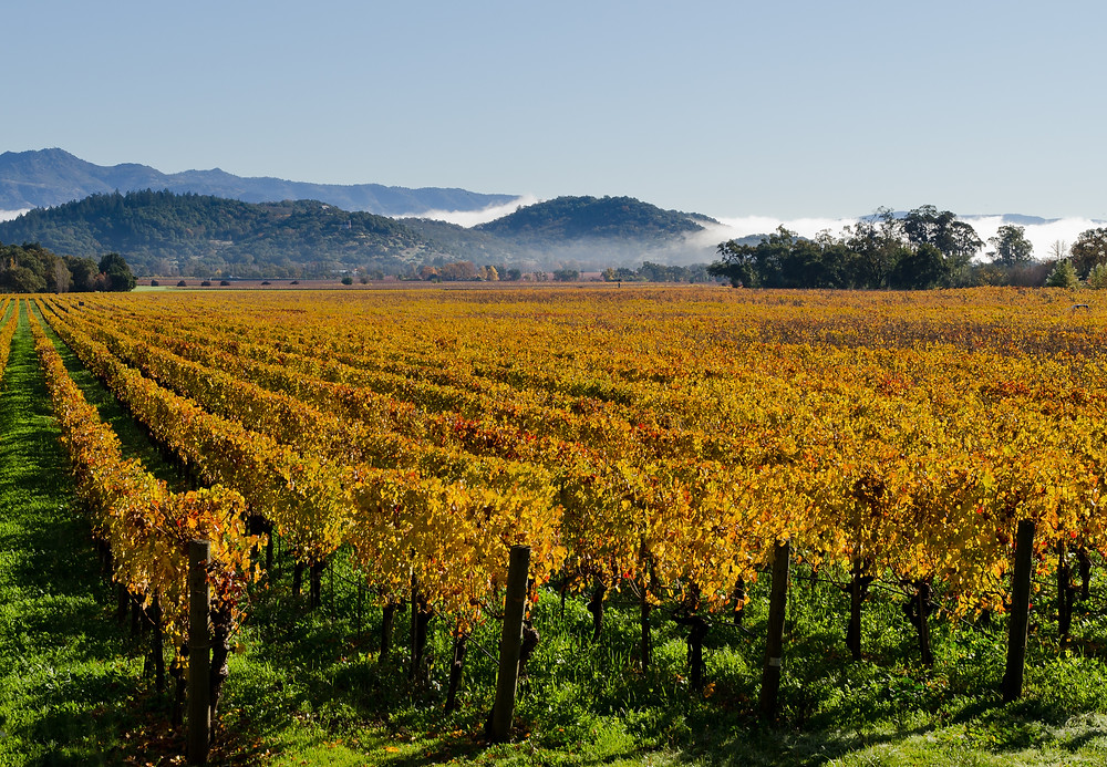 Napa Valley in the fall | FTLO Travel | Group Trips for Young Professionals