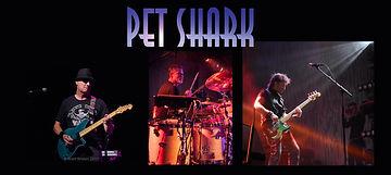 Pet Shark.jpg