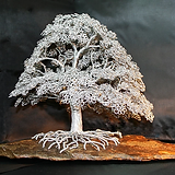 oak.webp