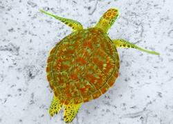 beautiful swimmer