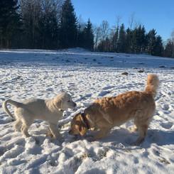 Juchu der erste Schnee!
