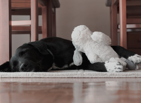 Pet Care For Your Home