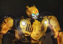 Bumblebee portrait.jpeg