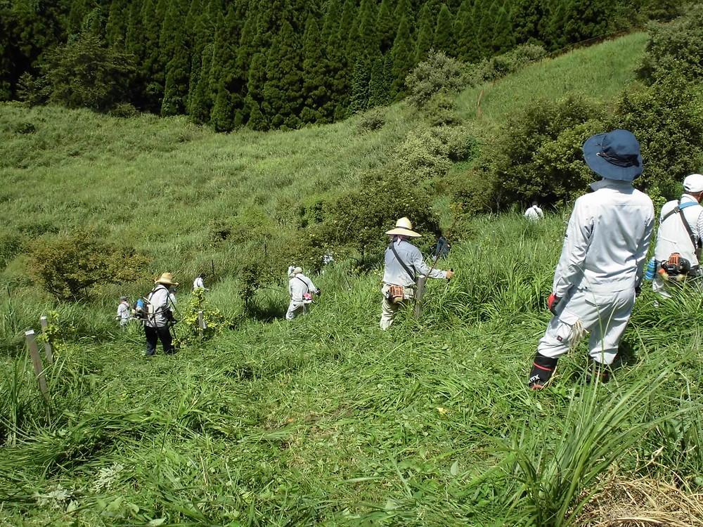 ボランティア活動(下草刈り)