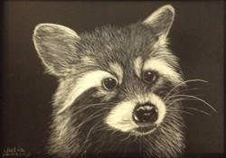 Raccoon by Julia Huntley_edited