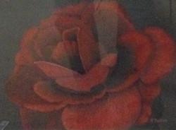 Red Rose by Roberta Hollis