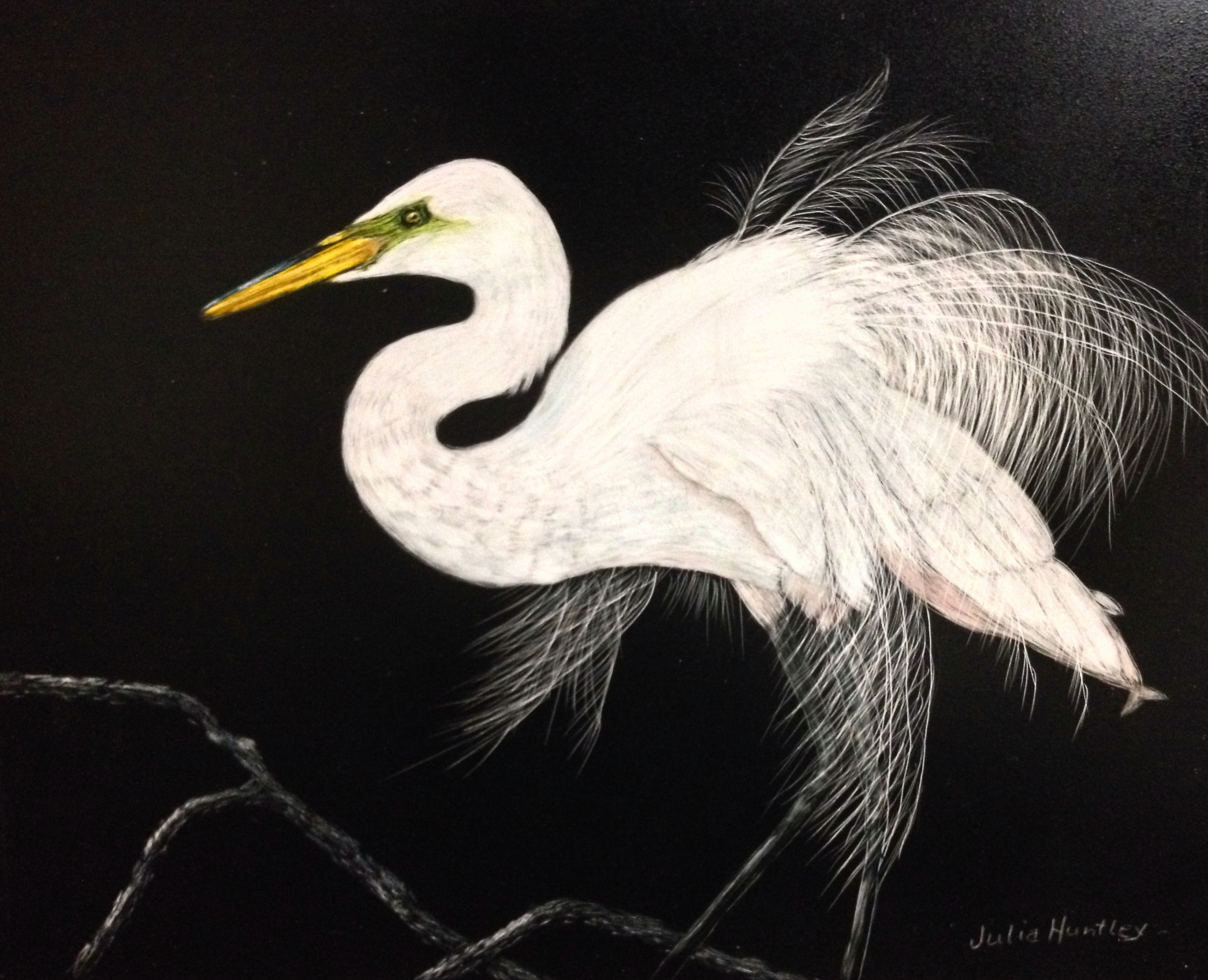 EGRET by Julia Huntley