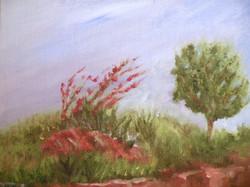 Redrock Garden