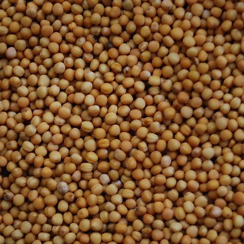 Mustard Seed (yellow)