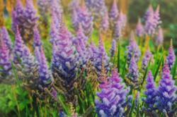 Spring Garden by Trayson Conner_edited
