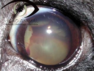 Manifestação ocular de doenças sistêmicas!