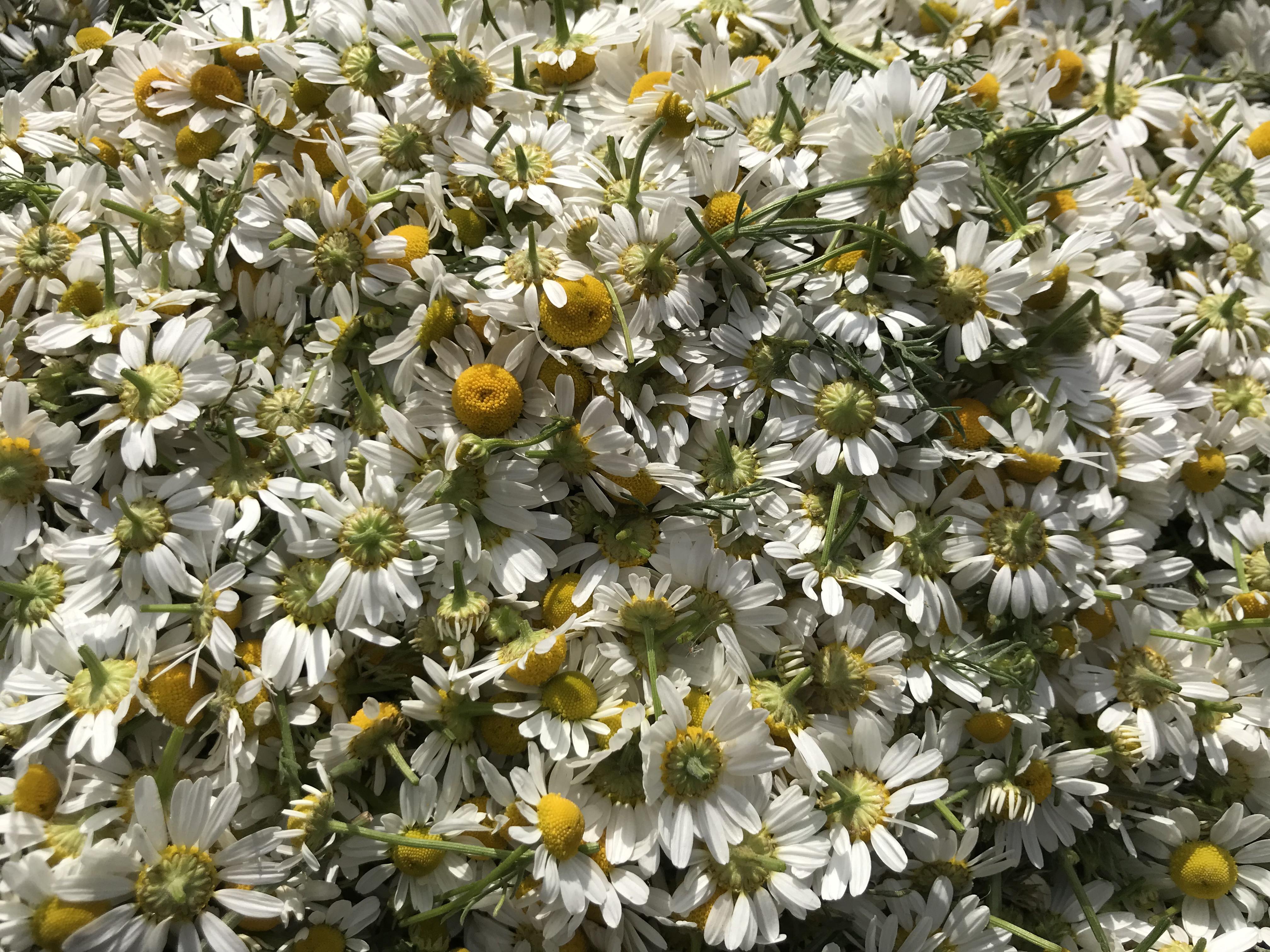 Les herbes de la iaia