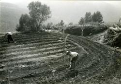 Cavant les patates