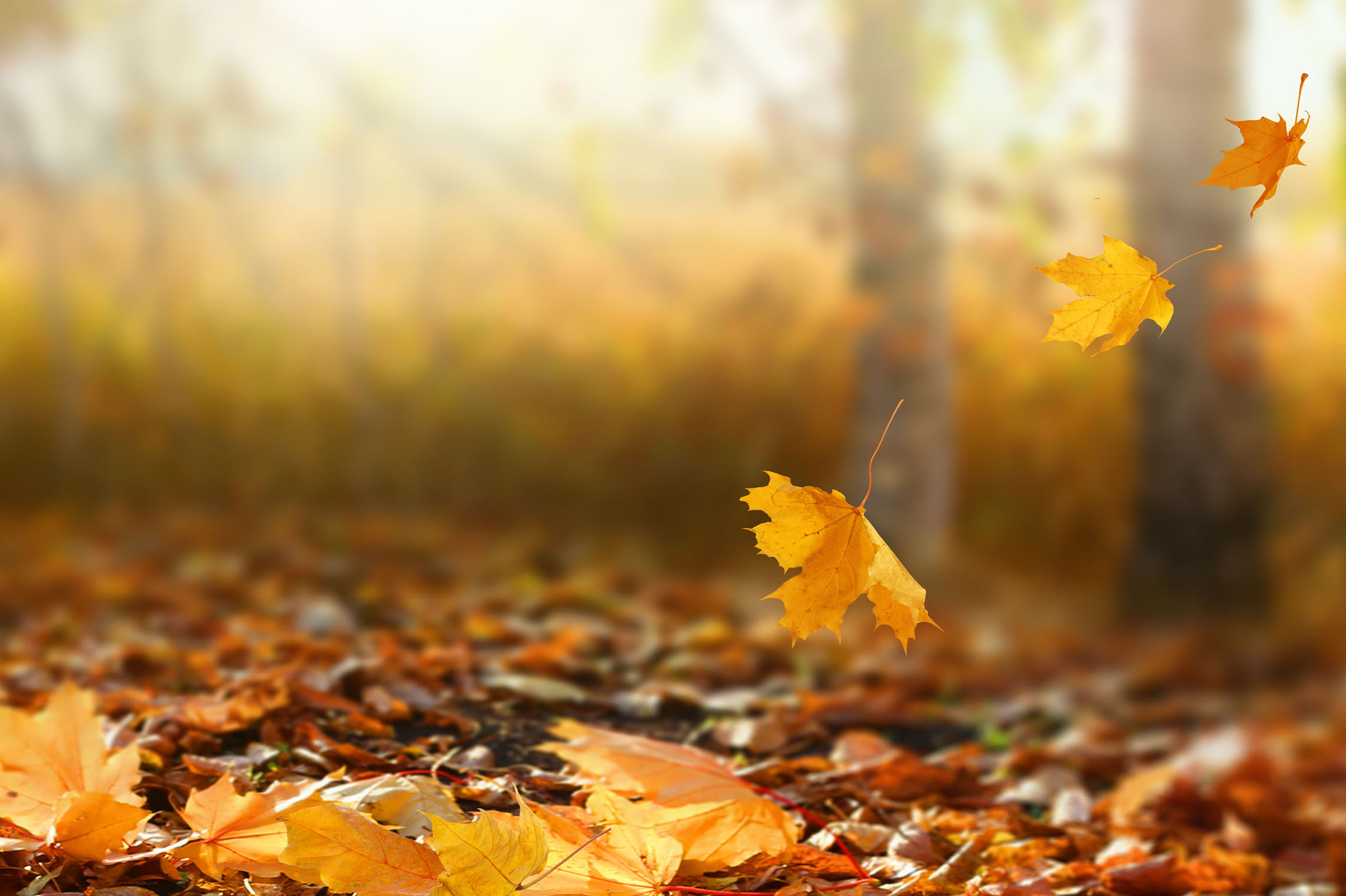 Autumn Collection #4
